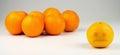 Sad segregated yellowish orange ostracized by darker taller oranges Stock Photos