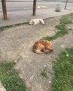 Sad Street Dogs