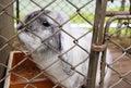 Sad white rabbit in the cage