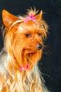Sad yorkshire lady sensitive female portrait nicely dressed up Royalty Free Stock Image