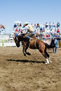 Saddle Bronc Stock Image