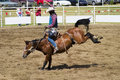 Saddle Bronc Royalty Free Stock Image