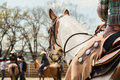 In the saddle horse on Western race, beautiful paint horse in a barrel racing event at a rodeo. Royalty Free Stock Photo
