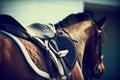 Saddle with stirrups Royalty Free Stock Photo