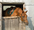 A saddled horse ready to ride waiting behind the closed door of stable Royalty Free Stock Photo