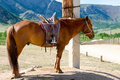 Saddled horse at tethering post Stock Image