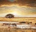 Safari african Stock Photo