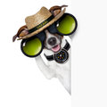 Safari dog searching and looking with binoculars beside banner Stock Photos