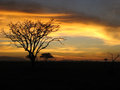 Safari sunset Royaltyfria Bilder