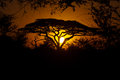 Safari sunset in serengeti tanzania africa Royalty Free Stock Photos