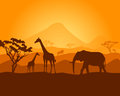 Safari vector silhouette of nature with wild animals with the sunset Royalty Free Stock Photo