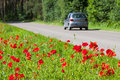 Safe and enjoyable journey poppies growing right near the asphalt road a car driving on the road Royalty Free Stock Photography