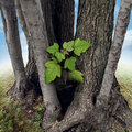 Safe investment business concept with a new green sapling being protected and nurtured by larger established trees growing around Stock Photos