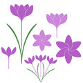 Saffron Royalty Free Stock Images