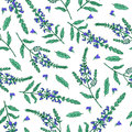 Sage flower hand drawn vector ink color sketch isolated on white, Doodle Healing plant, Vector seamless pattern, graphic
