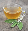 Sage leaves and sage tea Royalty Free Stock Photo