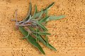 Sage leaves on a wooden background closeup photo of Stock Photos