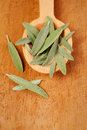 Sage leaves on wooden spoon Stock Images