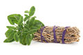 Sage smudge stick with fresh leaf sprigs over white background Stock Image