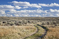 Sagebrush high desert in Wyoming Royalty Free Stock Photo