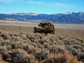Sagebrush and Mountains Royalty Free Stock Photos