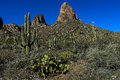 Saguaro cactus carnegiea gigantea at tonto national forest az Stock Photography