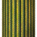 Saguaro cactus digital illustration of a cross section of a Royalty Free Stock Images