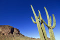 Saguaro cactus at picacho peak near tucson az Royalty Free Stock Image