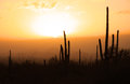 Saguaro cactus with sun set Stock Image