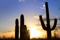 Saguaro National park Royalty Free Stock Photo