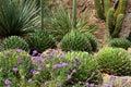 Saguaro National Park, USA Royalty Free Stock Photo