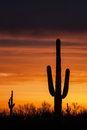 Saguaro silhouette cactus are silhouetted against a colorful sky in the sonoran desert Royalty Free Stock Photo