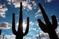 Saguaro silhouette on the Sonoran desert in Arizona