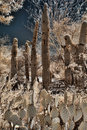 Saguaros and Cactus Royalty Free Stock Photos