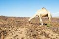 Sahara landscape Royalty Free Stock Photo
