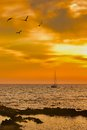 Sailboat leaving at dusk with some seagulls in foreground view of a acciaroli cilento southern italy Royalty Free Stock Photo