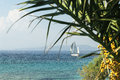 Sailboat on the summer sea against the backdrop of palm limb Royalty Free Stock Photo