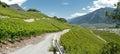 Saillon vineyards rhone valley wallis Royalty Free Stock Photo