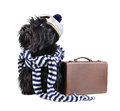 Sailor dog scotch terrier in stripped vest and hat sitting on a white background with brown bag Stock Photography