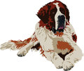 Saint Bernard dog breed Royalty Free Stock Photo