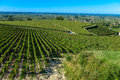 Saint emilion vineyard landscape france south west of Stock Photography