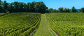 Saint emilion vineyard landscape france south west of Stock Photo