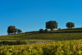 Saint emilion vineyard landscape france south west of Royalty Free Stock Image