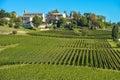 Saint emilion vineyard landscape france south west of Stock Photo