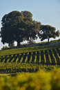 Saint emilion vineyard landscape south west of france Royalty Free Stock Photos