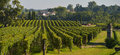 Saint emilion vineyard landscape south west of france pomerol Stock Photography