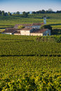 Saint emilion vineyard landscape vineyard south west of france bordeaux Stock Image