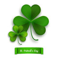 Saint Patricks Day vector greeting card, realistic shamrock leaves