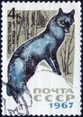 Saint Petersburg, Russia - February 06, 2020: Postage stamp issued in the Soviet Union with the image of the Silver Fox, Vulpes