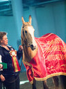 Saint petersburg russia th may champion of akhalteke horse in the championship in the exhibition Stock Photos